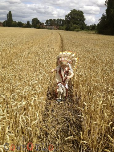 Alfie Wheat Field