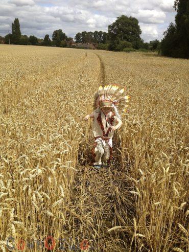 Alfie Wheat Field